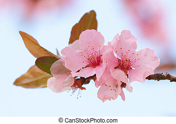 Pink springtime blossom with a blurred background
