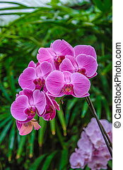 Pink streaked orchid flower in with leaves background.