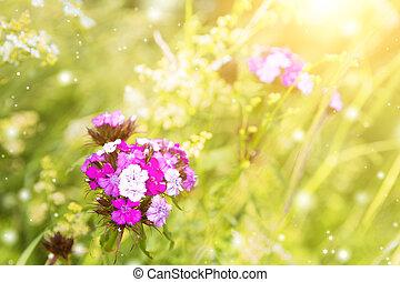 Pink summer flower in the garden.