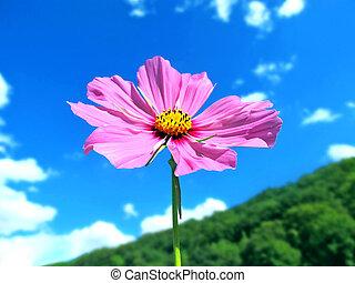 pink summer flower on mountain