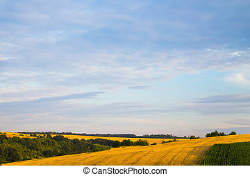 Pink sunrise or sunset over wheat or barley fields