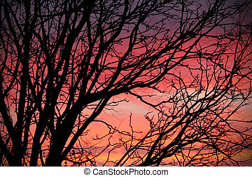 Pink Sunset with Tree Silhouette