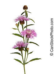 Pink thistle flowers and buds bouquet