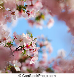 Pink tree blossoms blooming in colorful springtime
