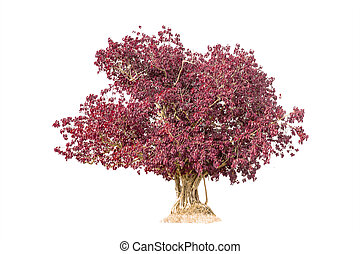 pink tree isolated against a over white background