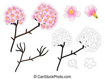 Pink Trumpet Flower Outline