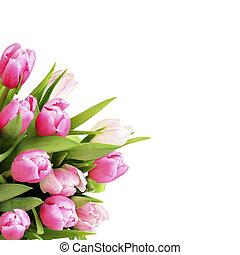 Pink tulip flowers bouquet in a corner