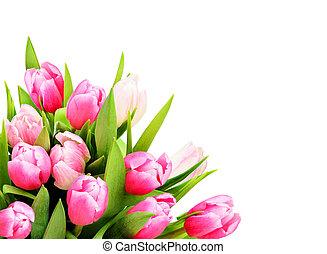 Pink tulip flowers in a corner