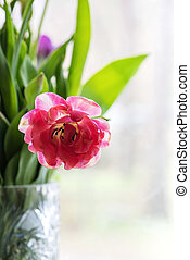 Pink tulip in a vase, window on the background