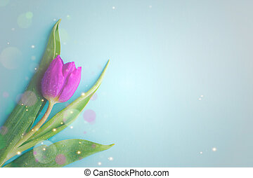 Pink tulip on blue background; greeting card