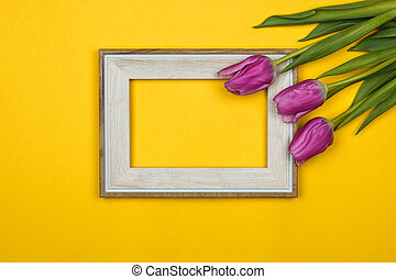 pink tulips and a white empty frame on colour background