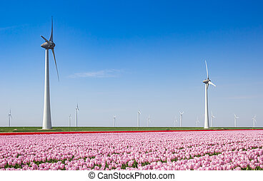 Pink tulips and wind turbines in springtime in The Netherlands