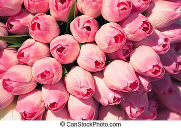 pink tulips background