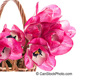 Pink tulips in a basket