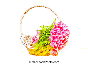 Pink tulips in a white basket. Isolated.