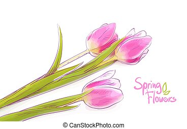 Pink tulips isolated on a white background.
