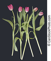 Pink tulips on a black background