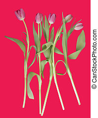 Pink tulips on a pink background