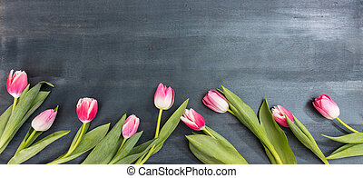 Pink tulips on blue background, copy space, top view