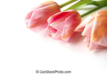 Pink tulips on wooden background, copy space