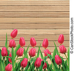 Pink tulips on wooden texture close-up background