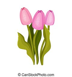 Pink tulips. Vector illustration on a white background.