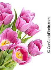 Pink tulips with green leaves isolated on white background