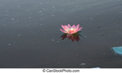 Pink water lily with candle on the water