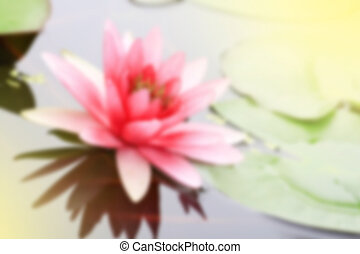 pink waterlily in nature pond