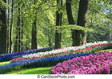 Pink, white and blue flowers in spring