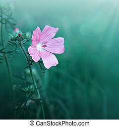 Pink wild flowers in grass isolated on green .