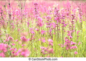 pink wildflowers - photo of spring meadow with pink...