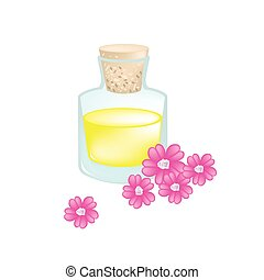 Pink Yarrow or Achillea Millefolium with Essential Oil - ...