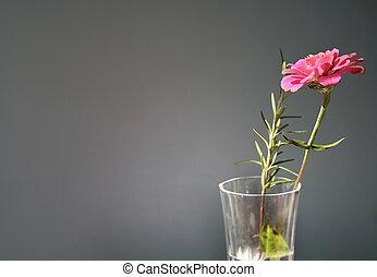 zinnia - pink zinnia in vase in  sunlight - room for copy