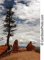 Pinnacles at Bryce