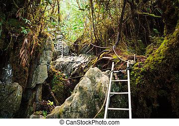 Pinnacles trek in gunung mulu national park - Ladders in...
