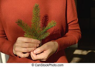 pino, mujer, árbol, tenencia, rama