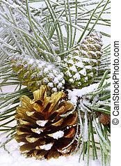 pino, ramo, con, coni, in, il, neve