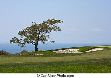 pinos, curso, torrey, golf