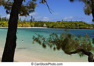 pinos, playa de sur, isla, pacífico