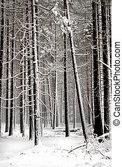 pinos, tranquilidad, nieve, ajuste, bosque, cubierto,...