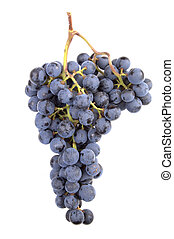 Pinot Noir Grapes - A real Pinot Noir grape cluster picked ...