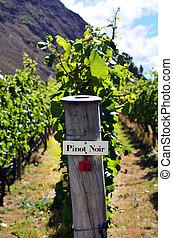 Pinot Noir sign on grape vine in Gibbston valley in Otago,...
