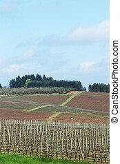 Pinot Noir Vineyards, Oregon - Photo of Pinot Vineyards in...