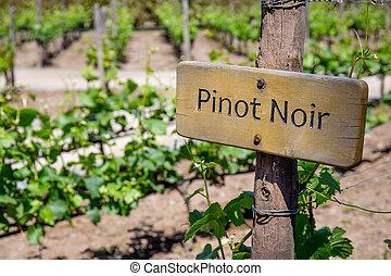 PINOT NOIR Wine sign on vineyard. Vineyard landcape.