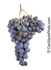 pinot noir, zrnko vína