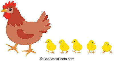 pintainhos, galinha