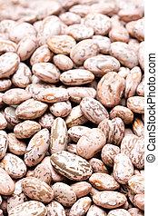 pinto beans macro