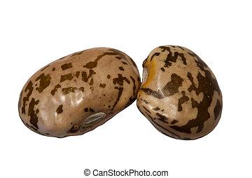 Pinto Beans - Two pinto beans lifesize isolated on white.