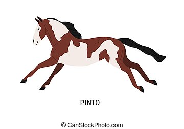 Pinto breed horse flat vector illustration. Pedigree equine...